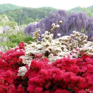 足利花卉公園一日遊