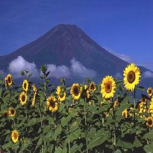 富士山 FREE PASS